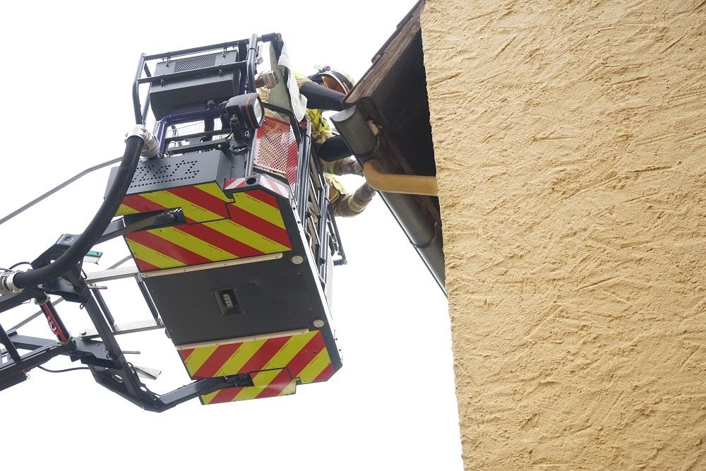 Katze hängt in Dachrinne fest