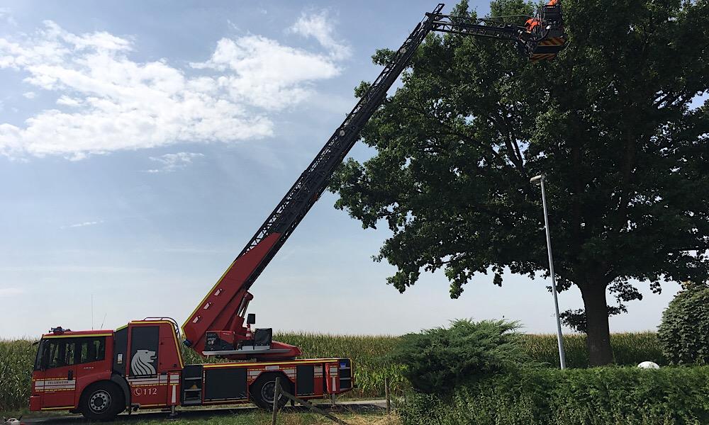 Baum droht zu kippen